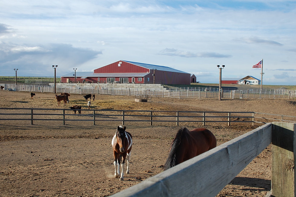 Iron Legacy Ranch Horse Riding Lessons a