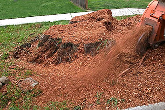 Skips Tree Service Stump Grinding.jpg
