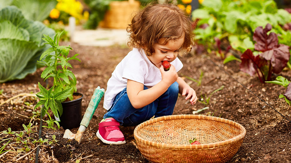 The best plants for gardening with kids