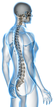 Westcoast Spine Center, Sarasota Chiropractor, Gonstead Chiropractor, Auto Accident injury help, Gonstead Chiropractic Care, Chiropractor Sarasota, sports injury treatment, low back pain relief