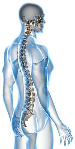 Westcoast Spine Center, Sarasota Chiropractor, Gonstead Chiropractor, Auto Accident related injury, Gonstead Chiropractic Care, Chiropractor Sarasota, sports injury treatment, low back pain relief