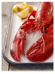 Lotsa-Lobster-Steamed-Lobster.png