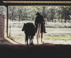 marriage counseling, horse whisperer