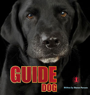 Guide Dog $NZ 39.99 (6-pack)