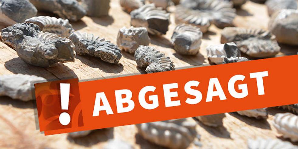 Ferienprogramm - Fossilien präparieren