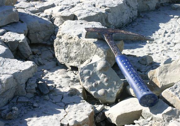 Fossilienfunde auf der geologischen Tour