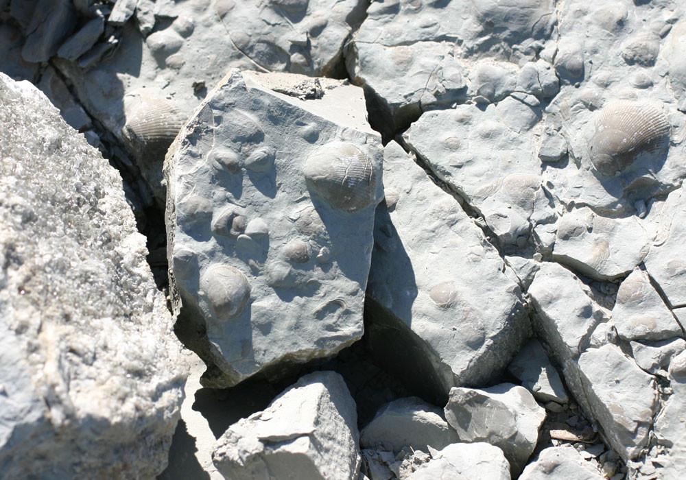 Fossilien suchen in Rüdersdorf