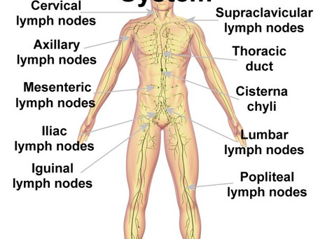 The Incredible Lymphatic System