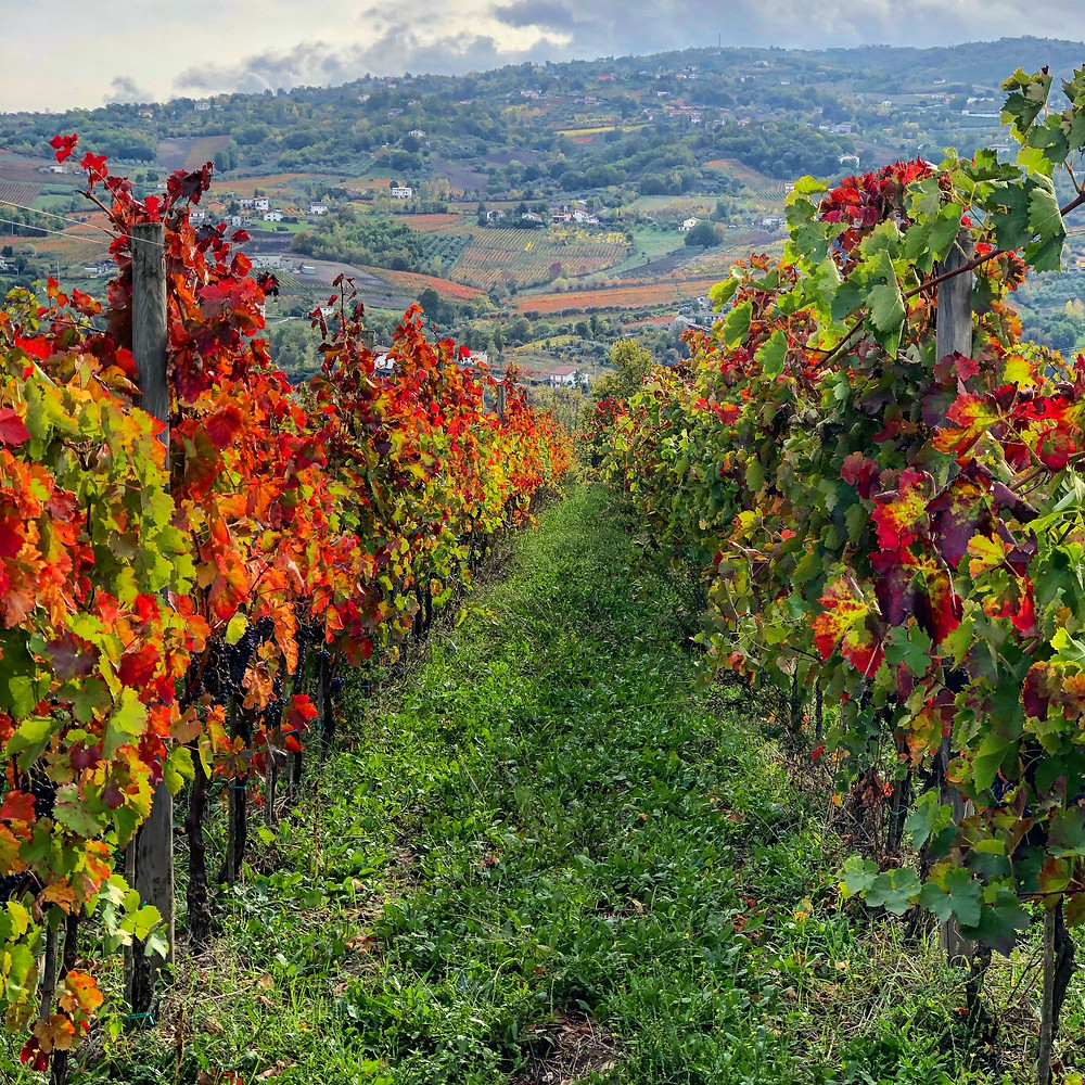 Views of the Irpinian countryside from the vineyard of Azienda Agricola Fiorentino