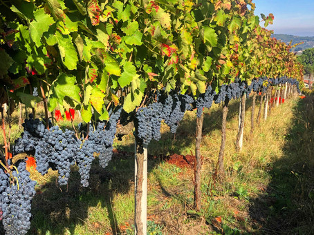 The Authentic Irpinia Wine Club Vol. 6 Tasting Notes