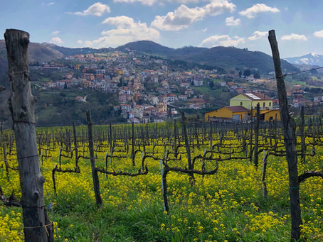 The Authentic Irpinia Wine Club Vol. 7 Tasting Notes