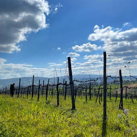 Tasting Notes: Natural Wines
