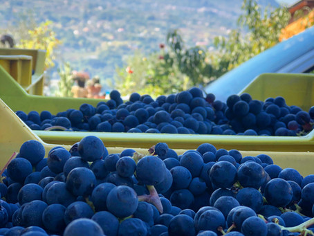 The Authentic Irpinia Wine Club Vol. 2 Tasting Notes