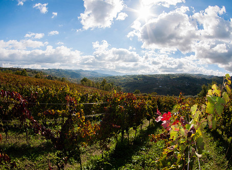 The Authentic Irpinia Wine Club Vol. 4 Tasting Notes