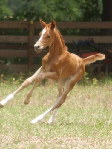 Aquafarms foal.jpg