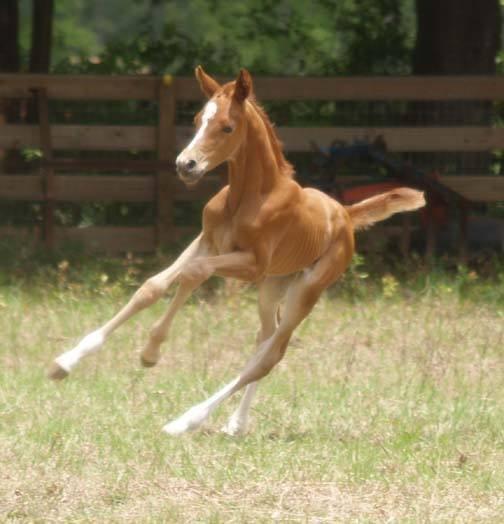 Aquafarms foal.jpg
