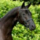Ivanhoe profile.jpg