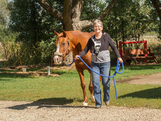 Volunteer of the Month (October)- Mare Jarvis
