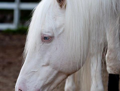 White Magic profile.jpg