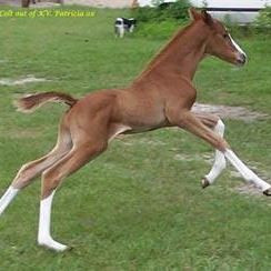 Foal by Oskar Pointman Q.jpg