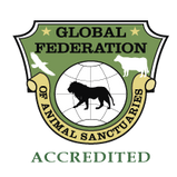 GFAS_Accredited.png