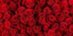 Natural red roses background.jpg