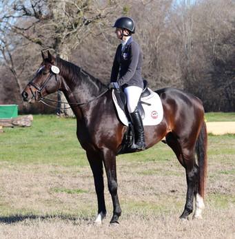 BARBAROSSA profile under saddle.jpg