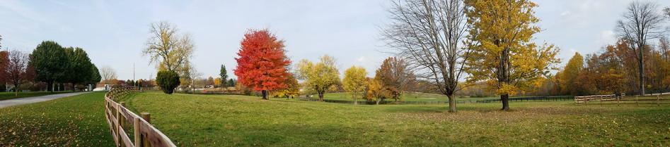 Pure Gold fall season.jpg