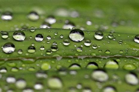 Dance of Raindrops