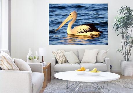 pelican dreaming.jpg