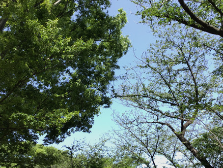 【振替休日・一日保育】三ツ池公園へお出かけしました。
