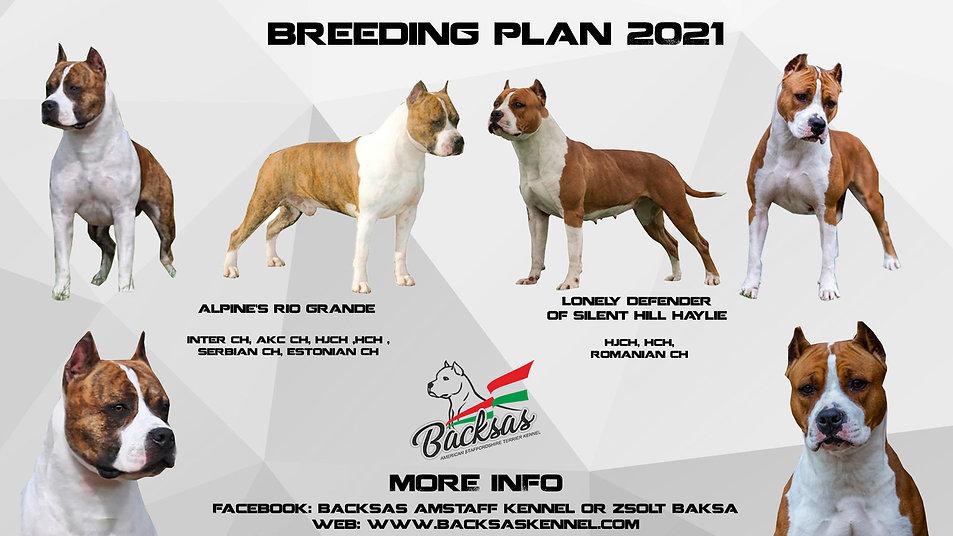 breeding plan .jpg
