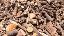 עצי קמין - כל סוגי עצי ההסקה