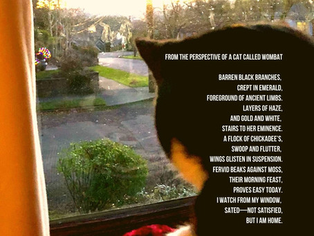 A Poem from the Perspective of a Cat Called Wombat