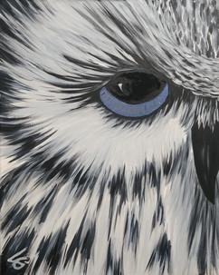 Hairy the Owl