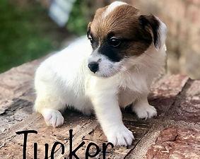 TUCKER.jpg