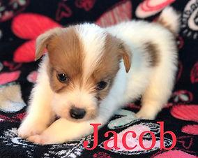 jacob1.jpg