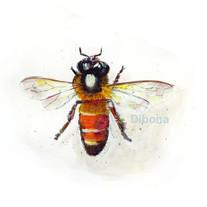 Dibona Bee 1.jpeg