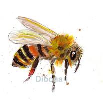 Dibona Bee 2.jpeg