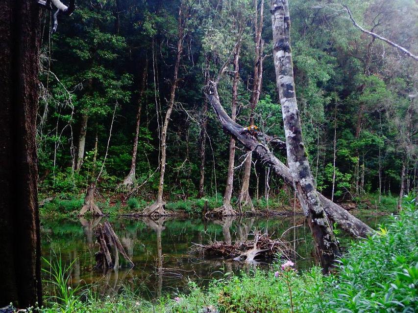 Travel Dirty Forest.jpg