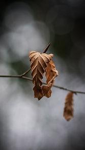 lachlan-gowen-dried-leaf-unsplash.jpg