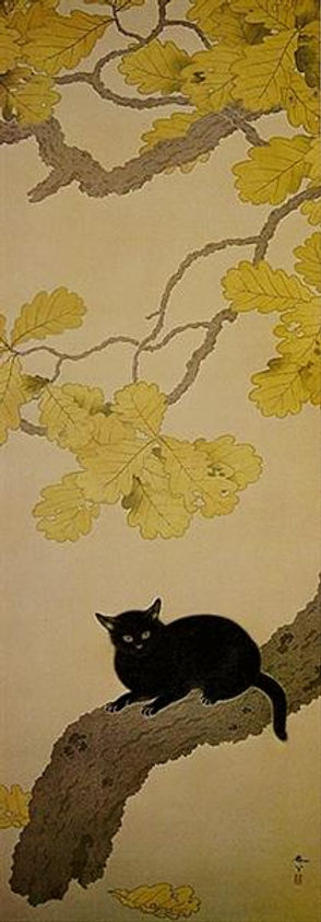 black-cat-kuroki-neko-1910.jpg