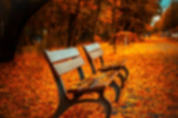 bench fall leaves.jpg