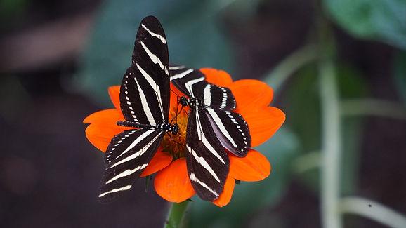 joshua-torres-butterflies-orange-flower.