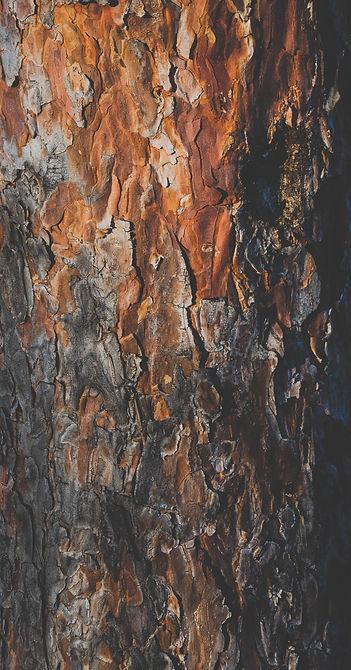 tree-trunk-mihai-lazar-8TDltliWdJY-unspl