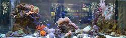 海水魚・サンゴ・水槽