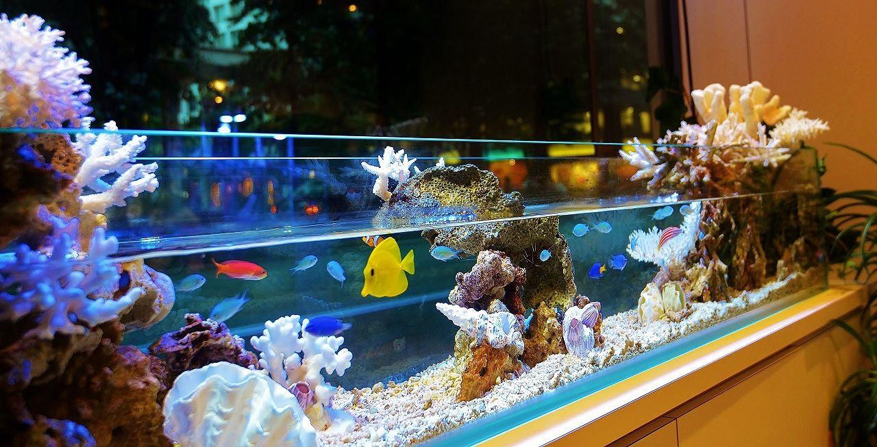 水景デザイン・水槽レイアウト・熱帯魚販売