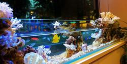海水魚・サンゴ・設置事例