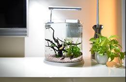まずはアクアリウムを試してみたいという方へ  お任せください!(株)クリーンアメニティ東京では  置き場所を選ばないハーフムーンミニ水槽またはミニ フレグランスを1ケ月間無料でお試しいただけます!    無料設置期間が終了後はそのまま継続(有料)もOK!  お気に召さなければ水槽は速やかに撤去いたします。  ※必ず契約しなければいけないというものではございません。