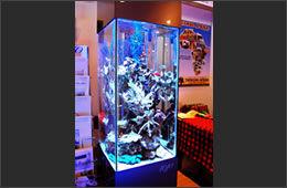 各種イベント・催事・展示会でのアクアリウム水槽展示のご予約
